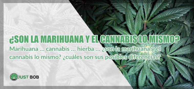 marihuana y el cannabis cbd