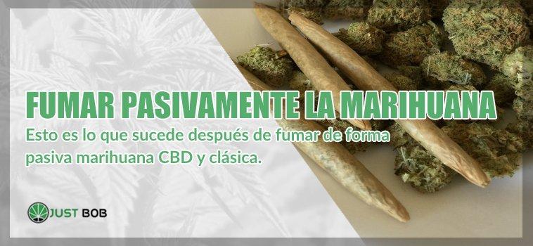 Fumar pasivamente la cannabis cbd