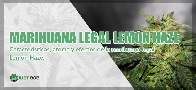 Marihuana legal Lemon Haze