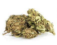 Cannabis CBD outdoor buds mix