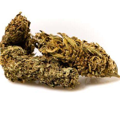 Semillas marihuana CBD Outdoor Mix