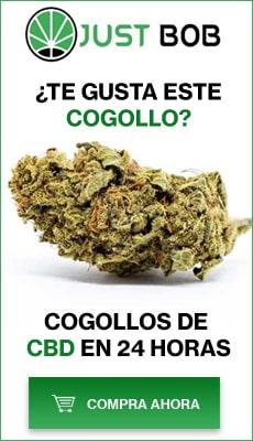 Te gusta este Cogollos