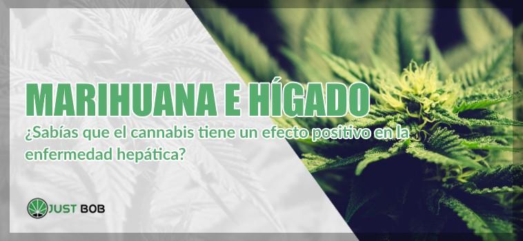 cannabis legal e hígado