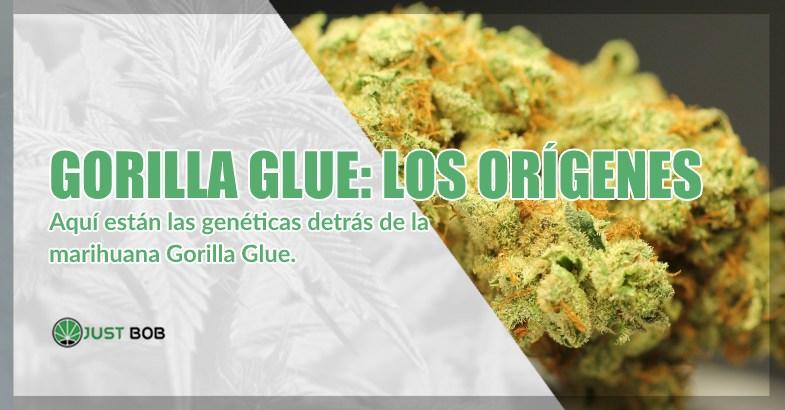 Gorilla Glue cannabis cbd los orígenes