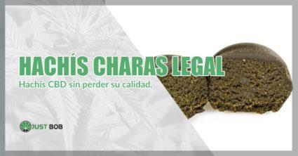 Hachís cbd Charas