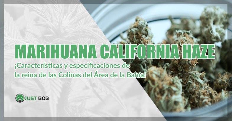 Marihuana sin thc California Haze