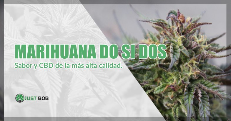 Marihuana sin thc Do Si Dos
