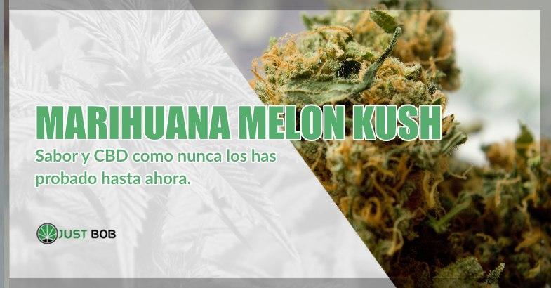 Marihuana sin thc Melon Kush