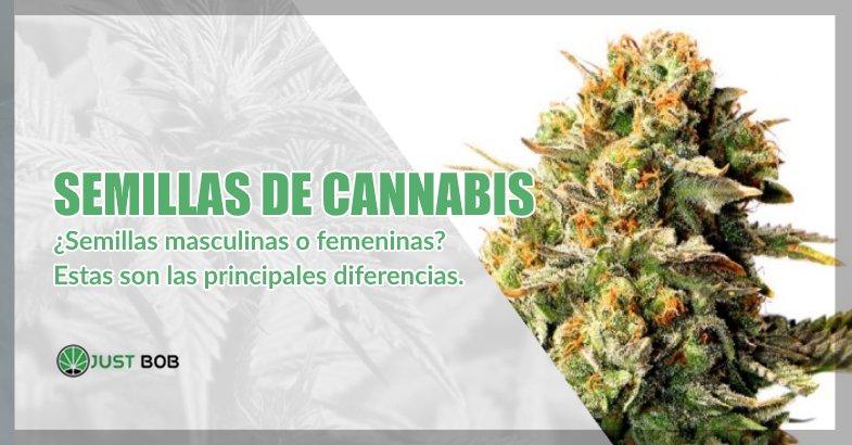 Semillas de cannabis y marihuana cbd