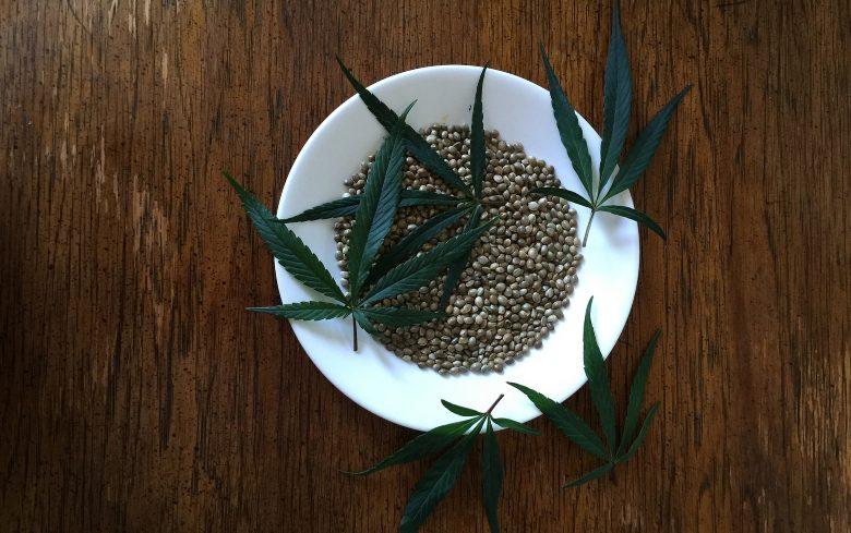 Semillas de marihuana cbd o clàsica