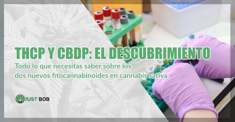 THCP y CBDP y cannabis cbd