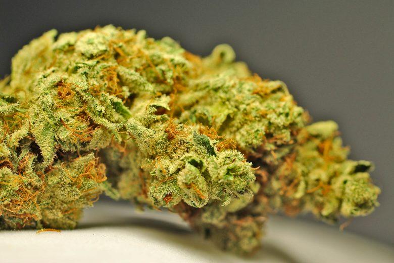 cannabis cbd white widow
