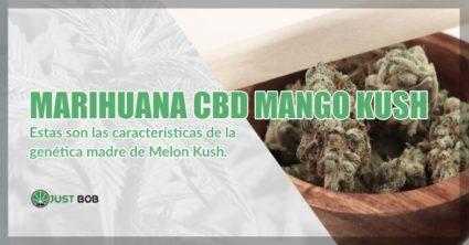 comprar Marihuana mango Kush