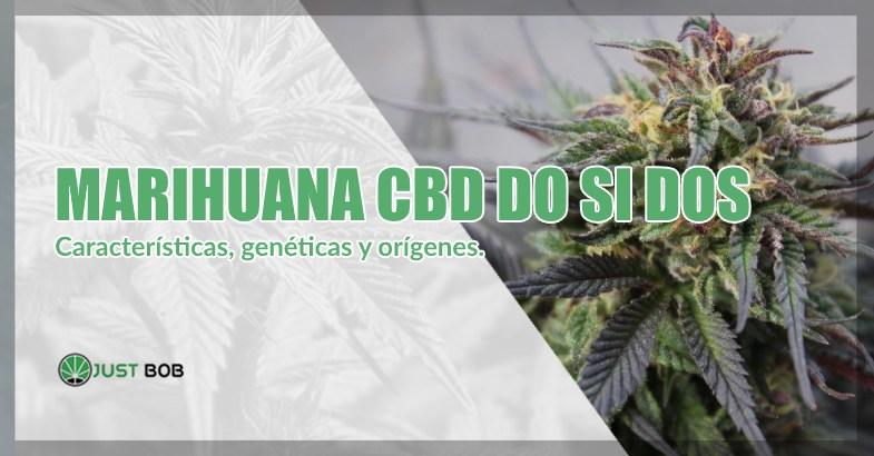 comprar marihuana CBD do si dos