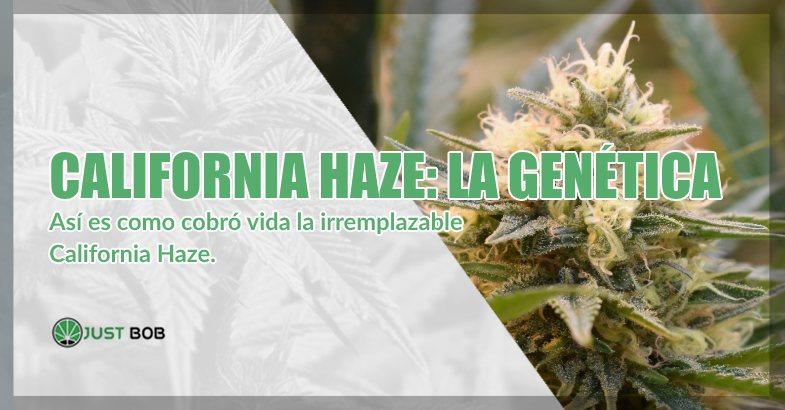 comprar marihuana California Haze