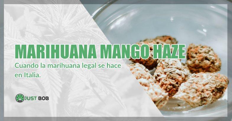 comprar marihuana Mango Haze