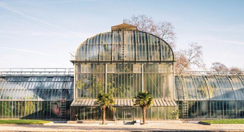 cultivo en invernadero de cannabis cbd