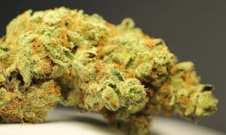 marihuana cbd gorilla glue