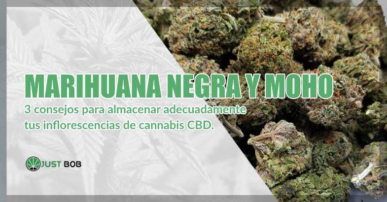 marihuana cbd y moho