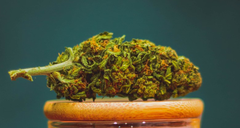 marijuana cbd mango haze