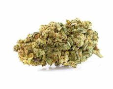 Cogollo de Marihuana CBD Purple GG#4