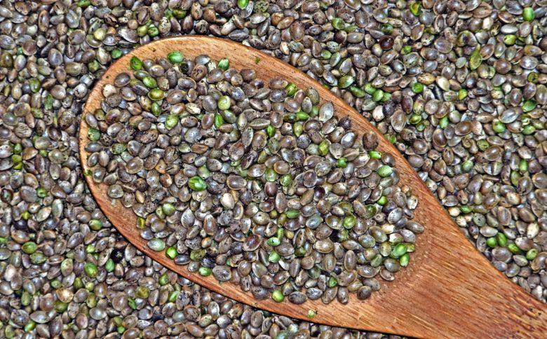 semillas de marihuana CBD