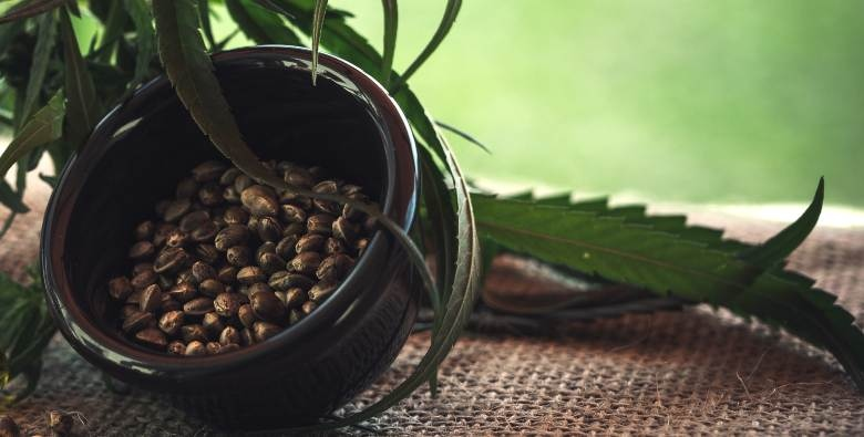 semillas de marihuana cbd y clásica