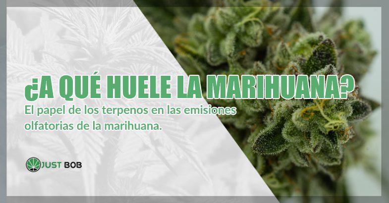 A qué huele la marihuana cbd
