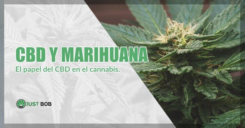 CBD y marihuana