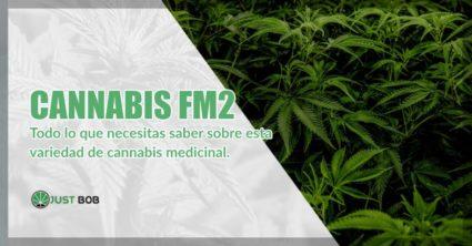Cannabis FM2 y marihuana cbd