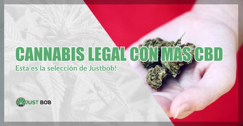 Cannabis legal con más CBD