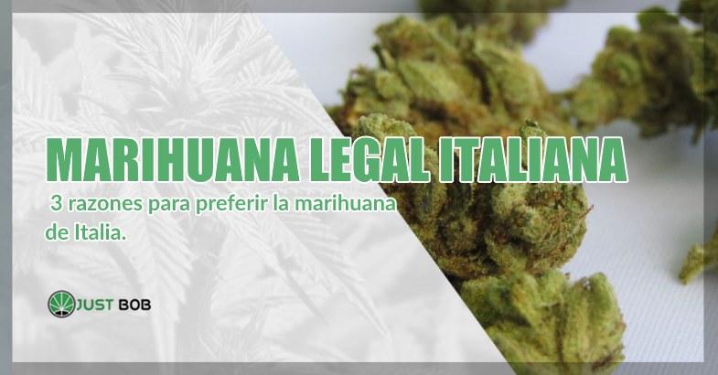 Marihuana cbd italiana