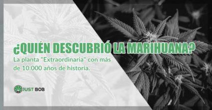 Quién descubrió la marihuana cbd