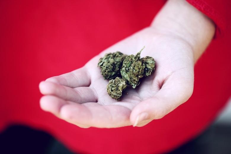 cannabis cbd en croacia