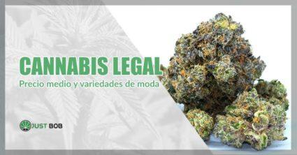Cannabis legal precio medio