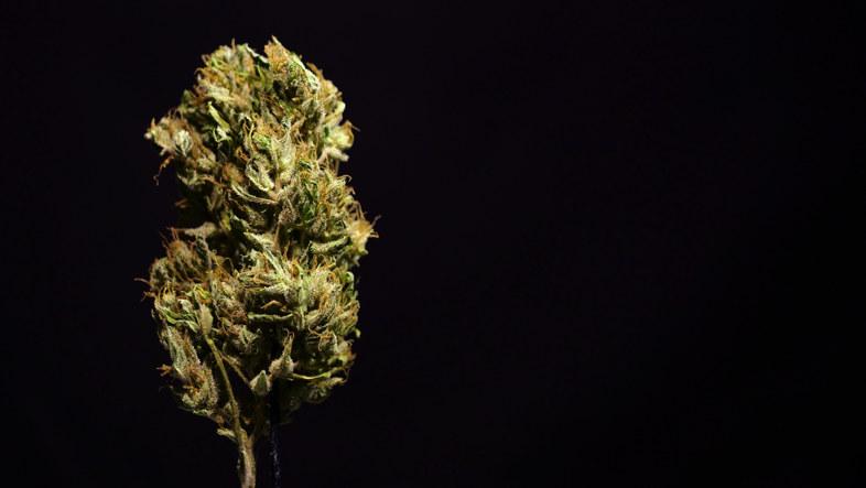 La marihuana para los ancianos: una señal alentadora desde los EE. UU. 2