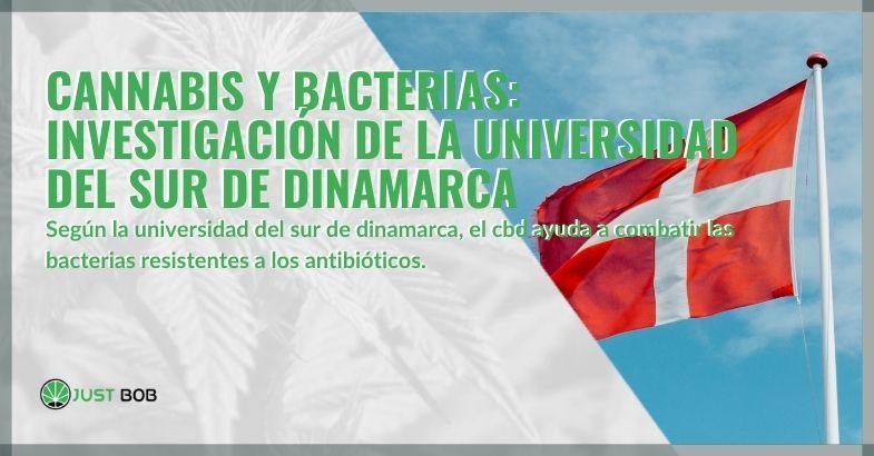 Cannabis y bacterias: investigación de la Universidad del Sur de Dinamarca