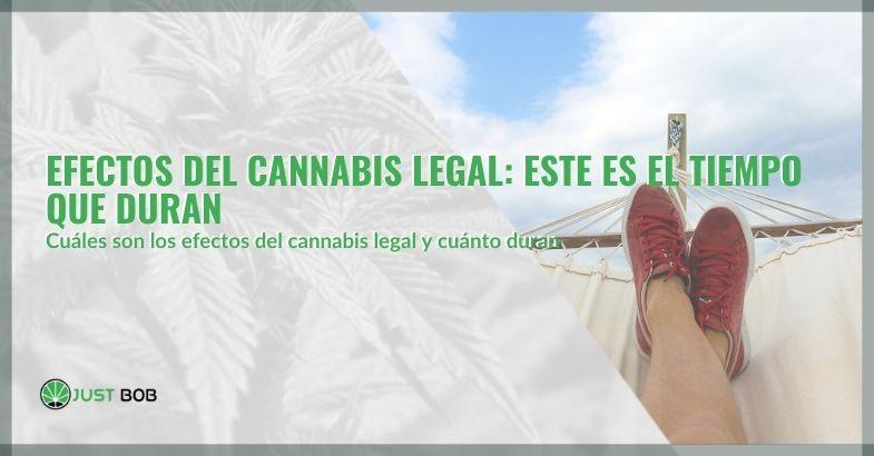Efectos del cannabis legal: este es el tiempo que duran