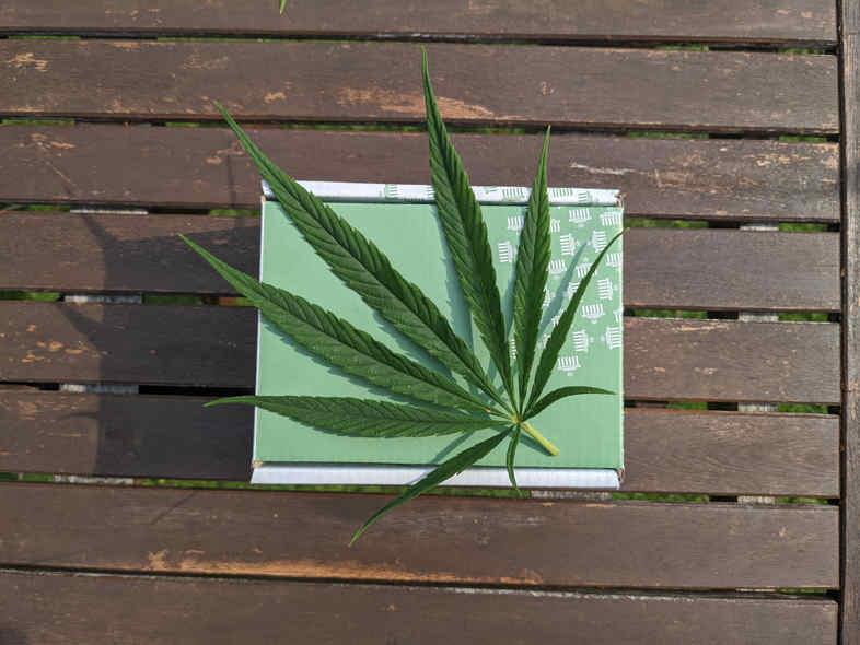 Marihuana CBD