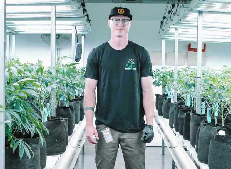 Cultivo Marihuana CBD