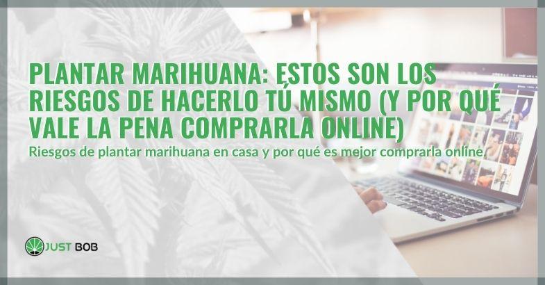 Plantar marihuana: estos son los riesgos de hacerlo tú mismo (y por qué vale la pena comprarla online)