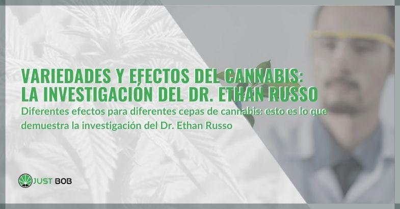 Variedades y efectos del cannabis: la investigación del Dr. Ethan Russo.