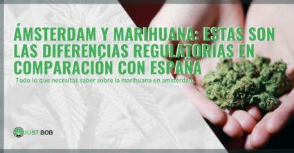 Diferencias de marihuana entre Amsterdam y España