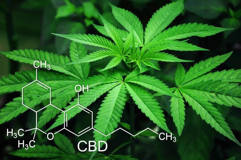 CBD procedente de receptores legales de cannabis