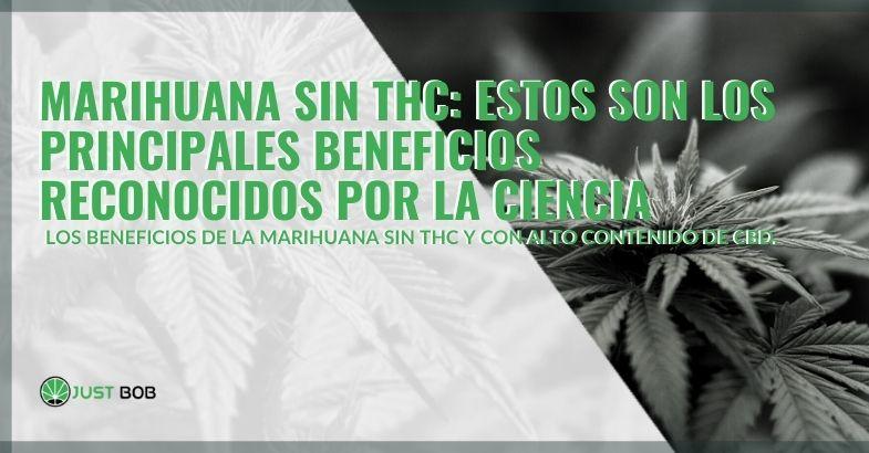 Los beneficios de la marihuana sin THC.
