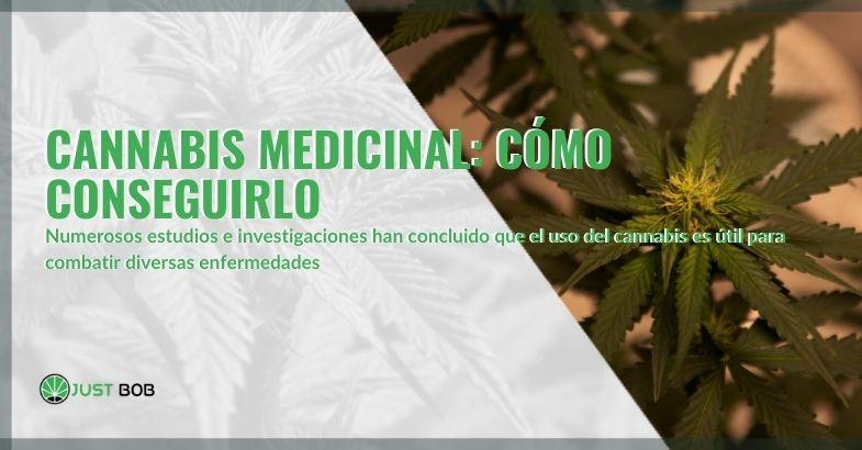 Comprender cómo se puede obtener cannabis medicinal