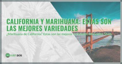 California y marihuana: estas son las mejores variedades