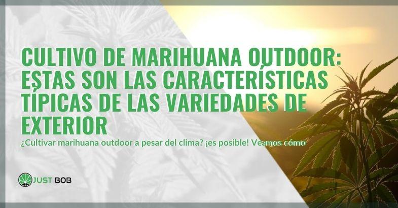 Características típicas de la marihuana outdoor