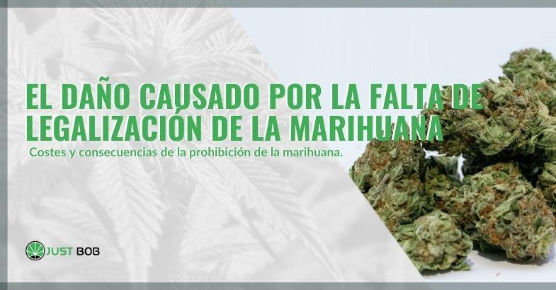 Los daños de no legalizar la marihuana