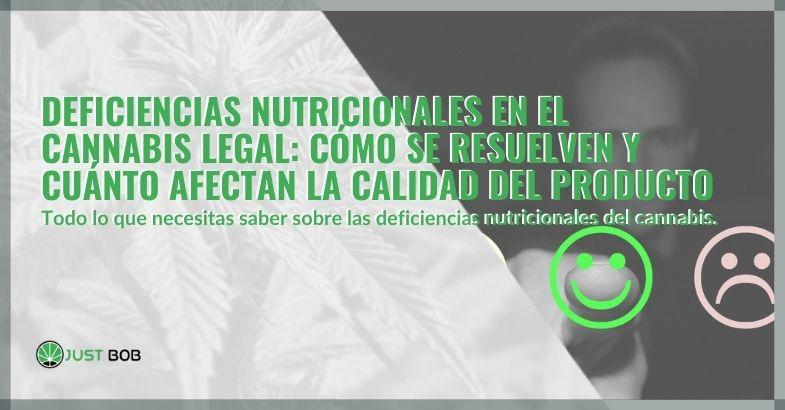 Deficiencias nutricionales en el cannabis legal: cómo se resuelven y cuánto afectan la calidad del producto